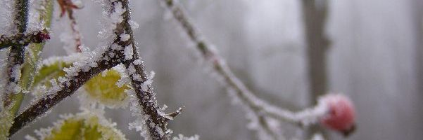 Im Winterwald unterwegs…